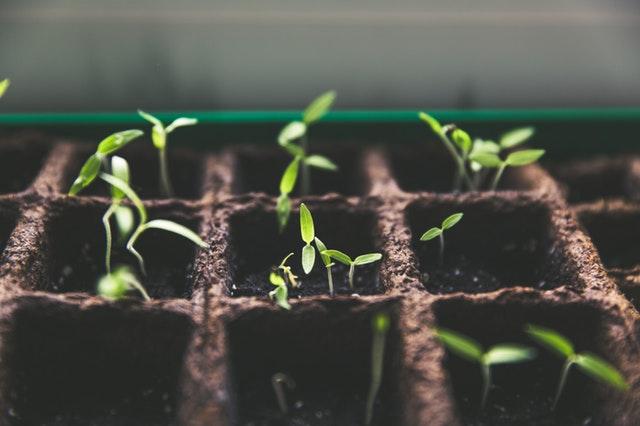 Incrementar a valorização orgânica